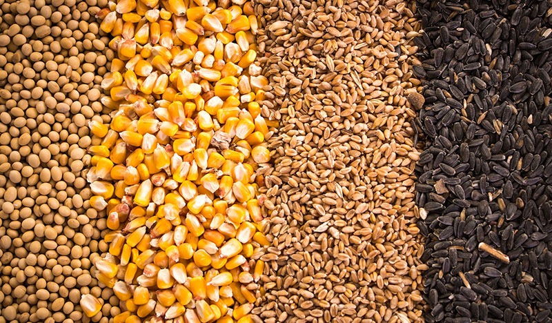 Commodities and Grains Industry